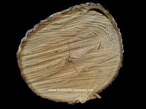 Reifholzbäume